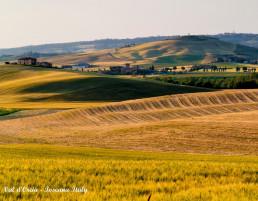 Campo di grano e colline della Val d'Orcia